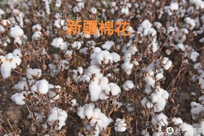 你们这些普通却又自信的品牌,不配用新疆棉花