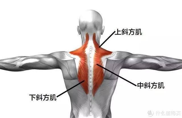 站内首评:真•物理揉捏,不刺痛——西屋颈椎按摩枕U209『深度体验报告』