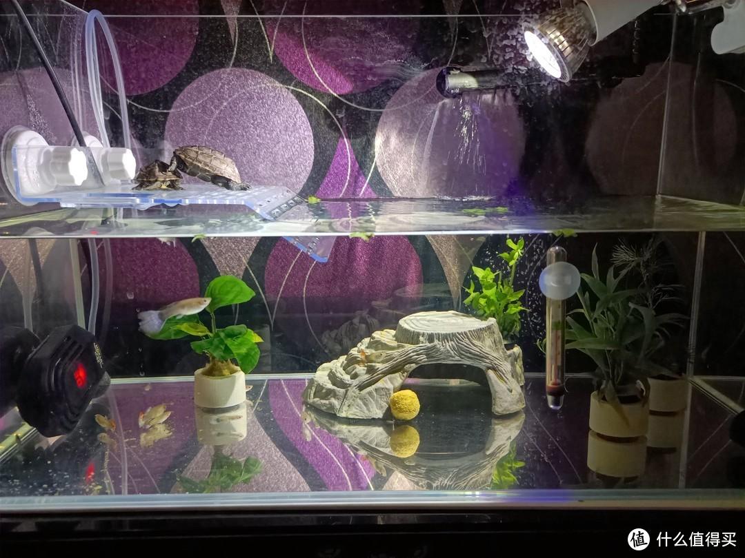 龟缸、龟粮、过滤……养龟各种好物推荐,说说半年来为龟准备的各种装备。