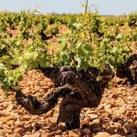 jancisrobinson.com发布了2021年度的葡萄酒写作比赛