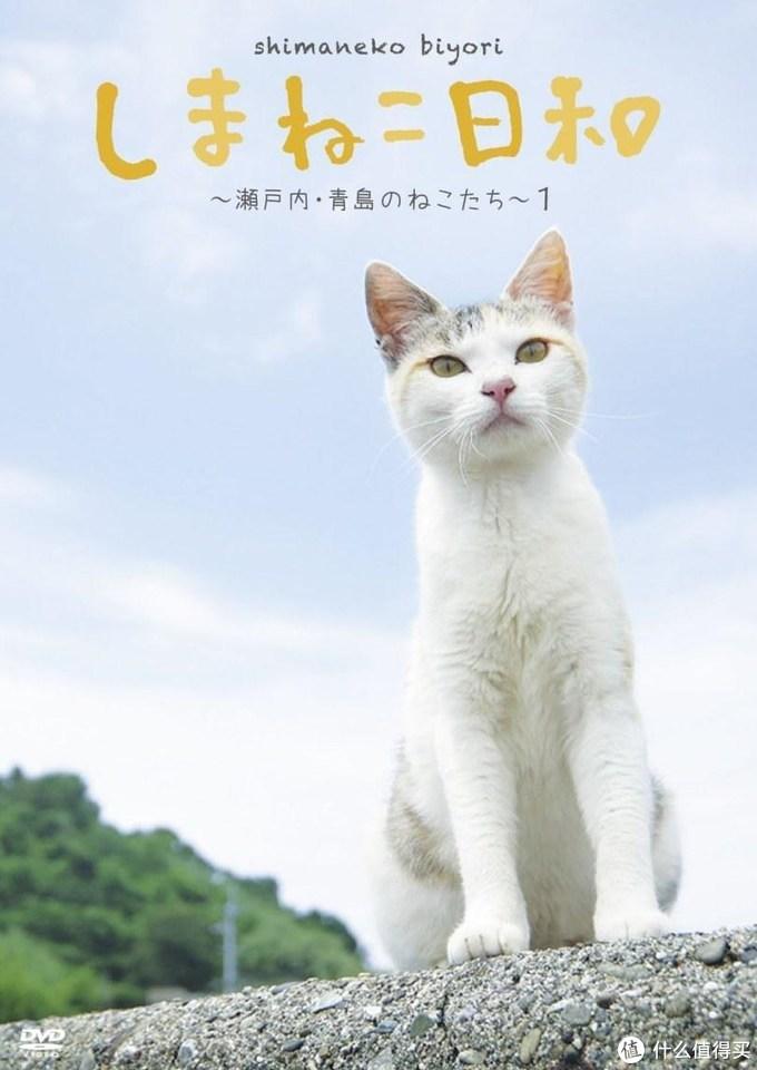 萌物来袭-12部猫咪治愈系影视剧,让打工劳累一天的你观影后幸福满满