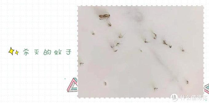 高效灭蚊于无形,小禾幻影灭蚊灯测评!