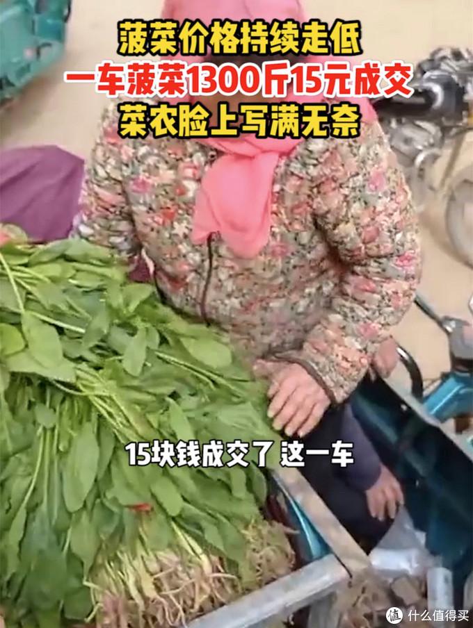 """1300斤菠菜只""""贱卖""""15元,春天的""""营养模范生""""怎么吃"""