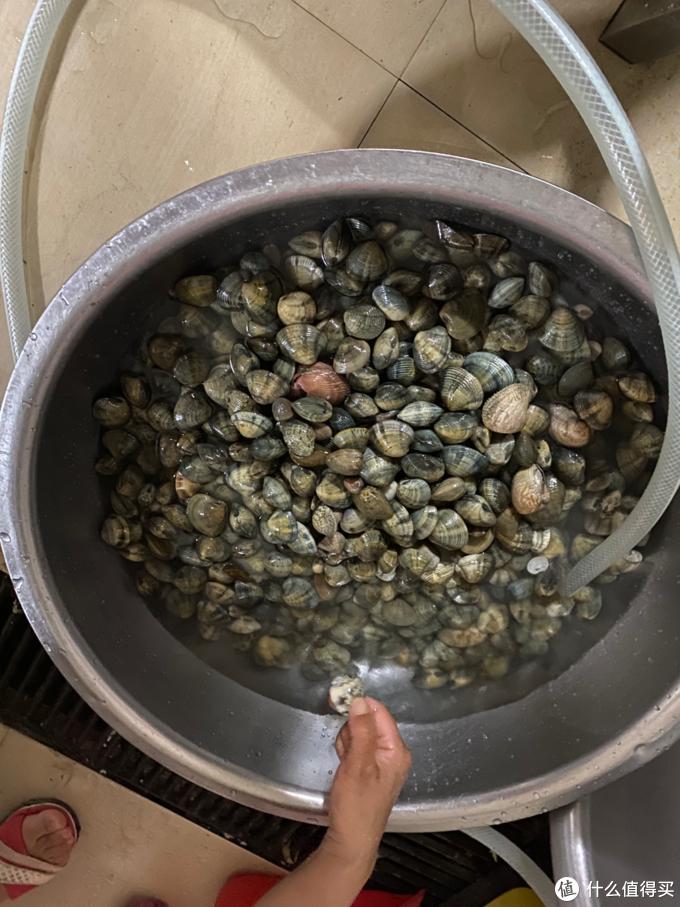 海南免费摸花蛤景点:陵水县新村镇海边退潮摸花蛤,享受免费花蛤大餐