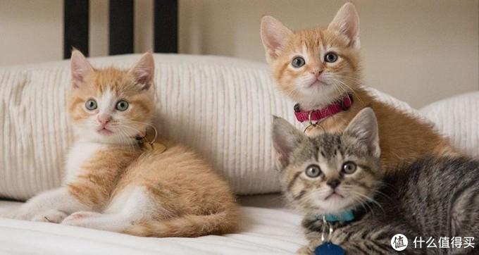 什么牌子的猫粮好?好猫粮的标准是什么?