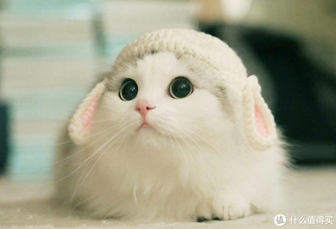 猫咪到底要不要吃猫多维,猫多维对猫咪重要么