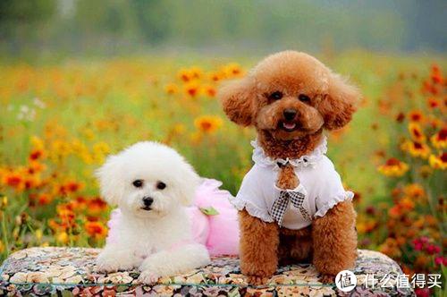 狗钙片对狗狗来说真的很重要吗