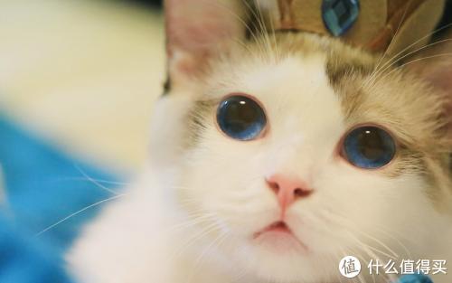 猫咪吐毛是怎么回事?
