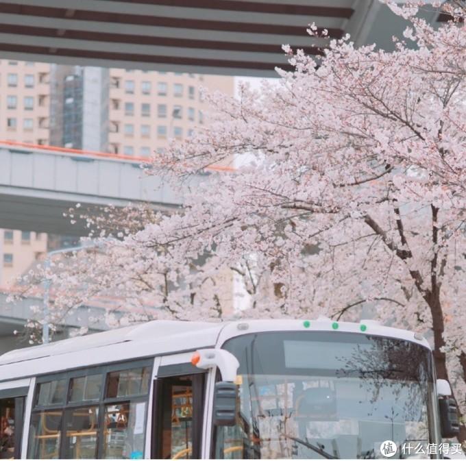 魔都小众樱花场地丨穿着JK制服来记录这浪漫的春日
