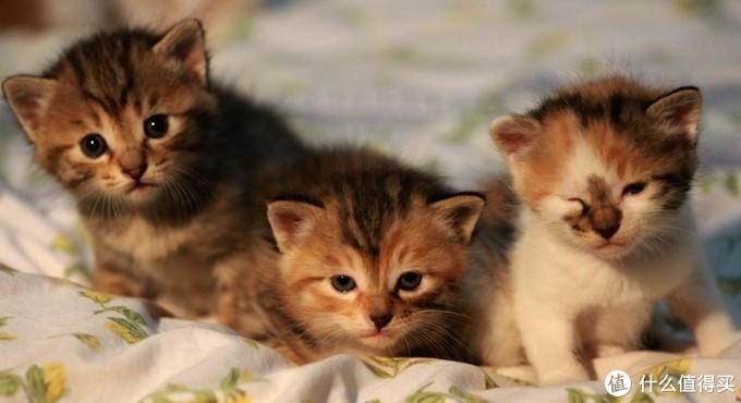猫咪可以天天吃营养膏吗?