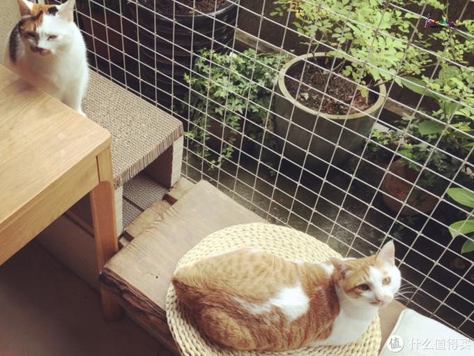 坐拥山景,与猫为伴!杭州一对夫妇把日子过成了诗与远方,羡慕