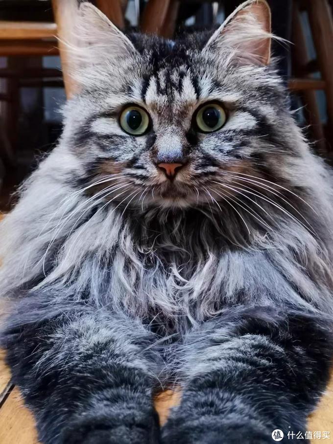 波斯猫适合吃什么猫粮?品质过硬的猫粮都在这
