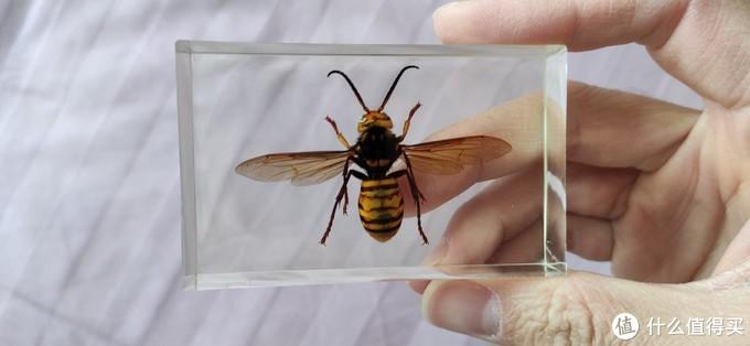 小朋友的认知之路-记昆虫标本制作