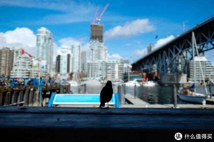 融化在温哥华的春天里
