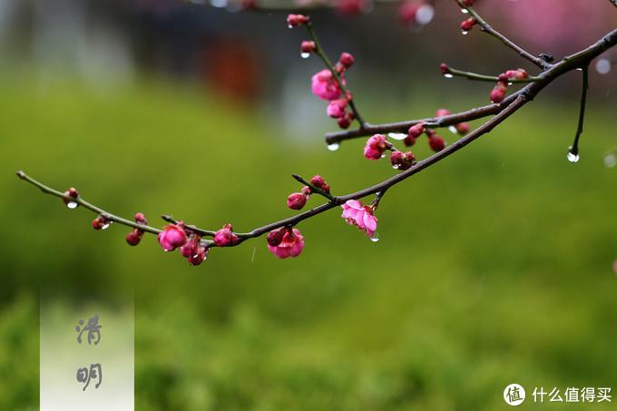 """清明将至,饮食要记得""""两多一少"""",顺应时节,吃对健康过春天"""