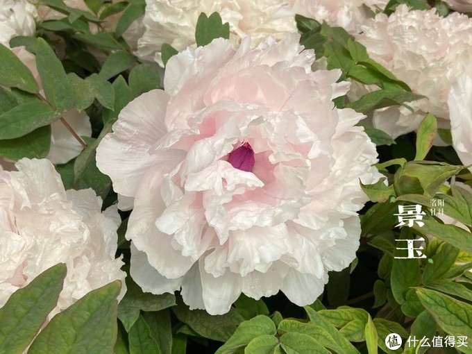 【河南】洛阳小记-中国国花园