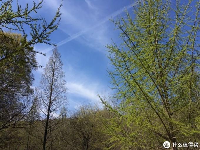 天气好极了,用王羲之那句话说就是天朗气清惠风和畅。
