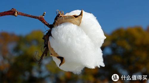 支持新疆棉!我为你准备了这份新疆棉产品推荐清单!