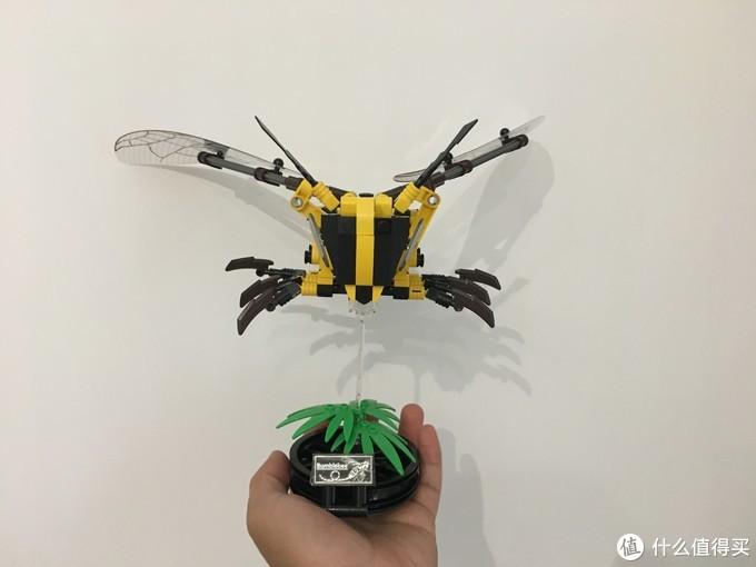 我有一只小蜜蜂,但是它不会叮人