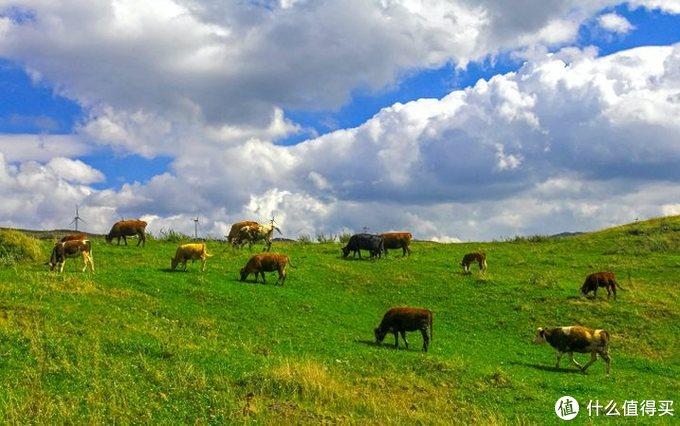 国内现在还有哪些草原值得一去?