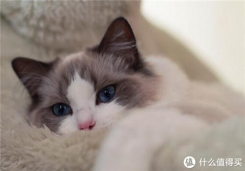 国产猫粮推荐的品牌有哪些?