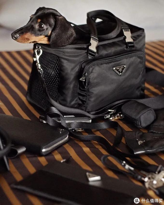 宠物穿4千的名牌,背10万的包,你穿什么?有钱猫狗的世界长这样!