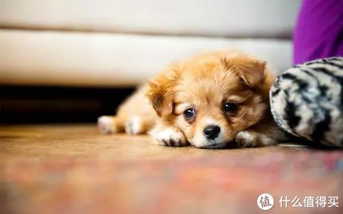 狗钙片之狗狗补钙的重要性