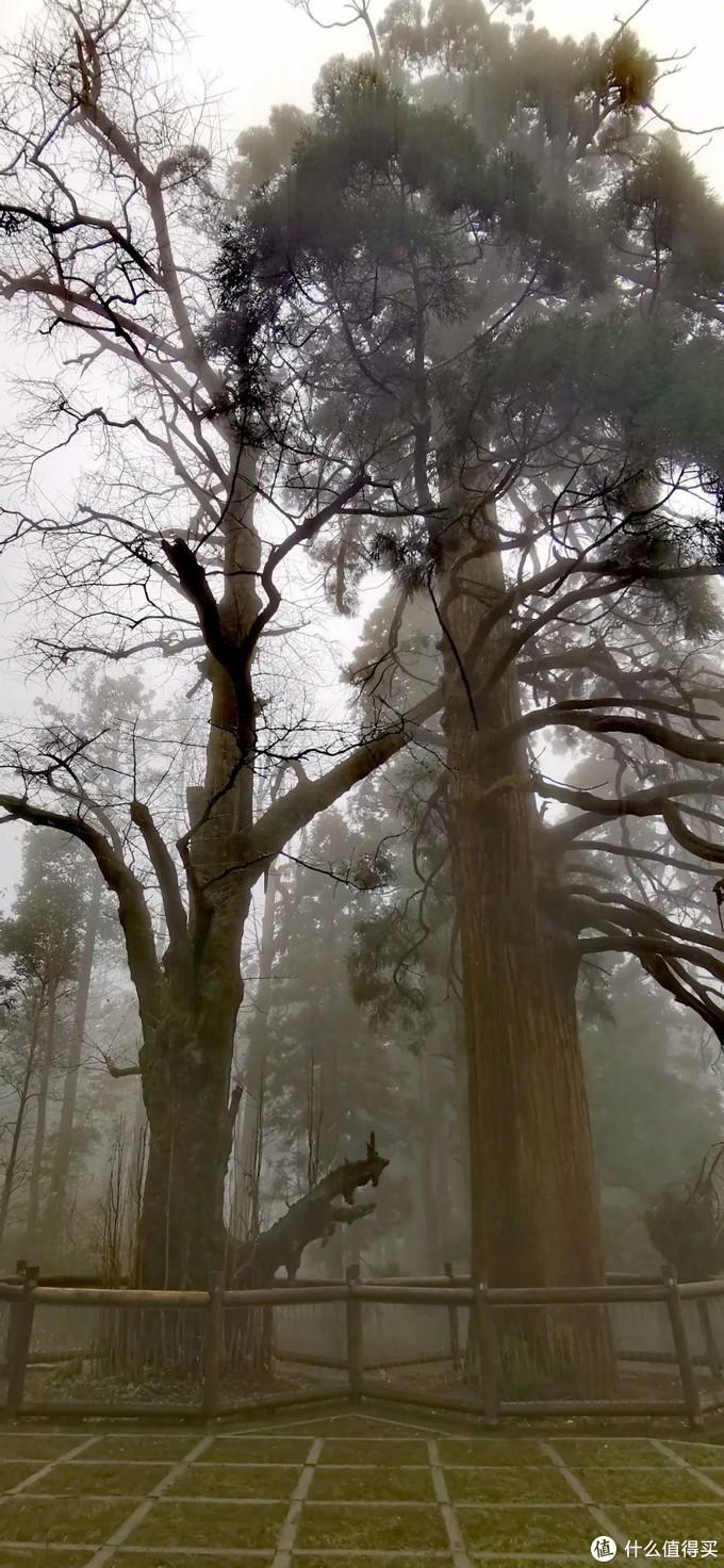 不识庐山真面目,只缘身在雾海中,庐山两日游