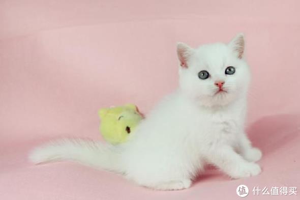 猫咪营养膏的功效和使用方法