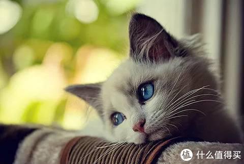 猫吃维生素有什么作用?
