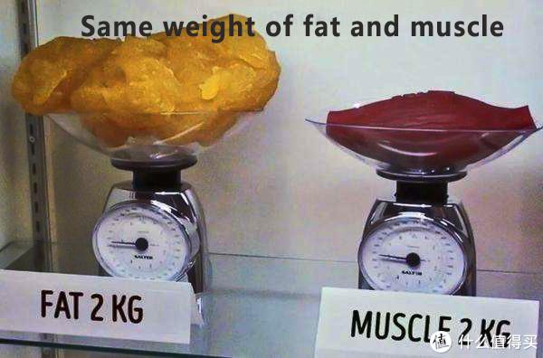 万恶之源二:同等重量脂肪和肌肉体积差距