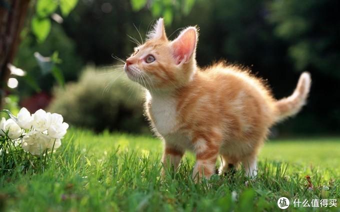 猫吃维生素的功效和作用