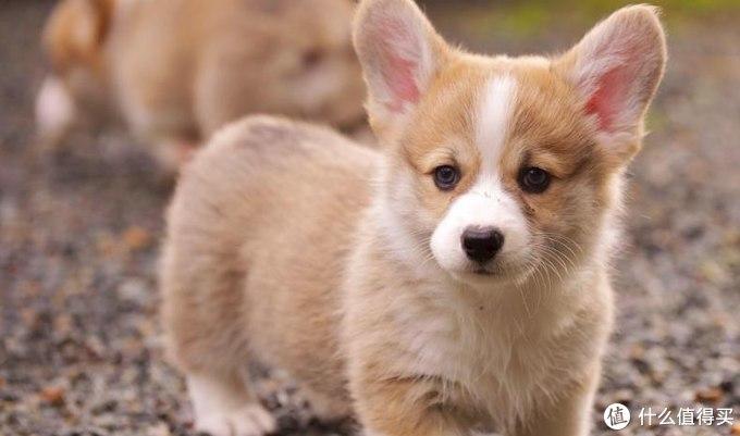 狗狗营养膏什么牌子比较好?
