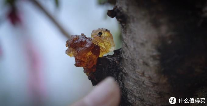 李子柒家的桃花开了,吸引2500万人次围观,原来桃花不仅是看的