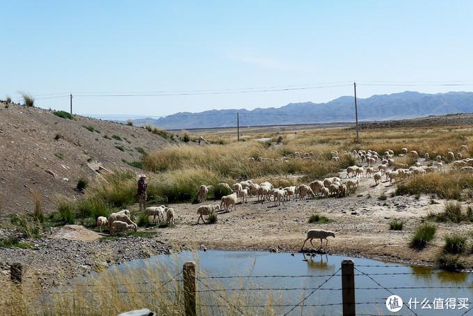 高速跑放羊的牧民