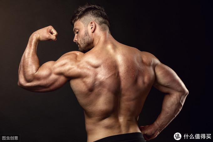 绝对力量和肌肉大小之间到底有怎样的关系?