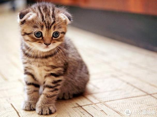 猫能喝奶粉吗?答案揭晓!