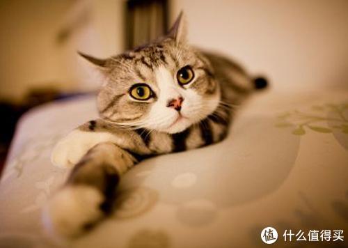 养猫须知:猫吃维生素的好处