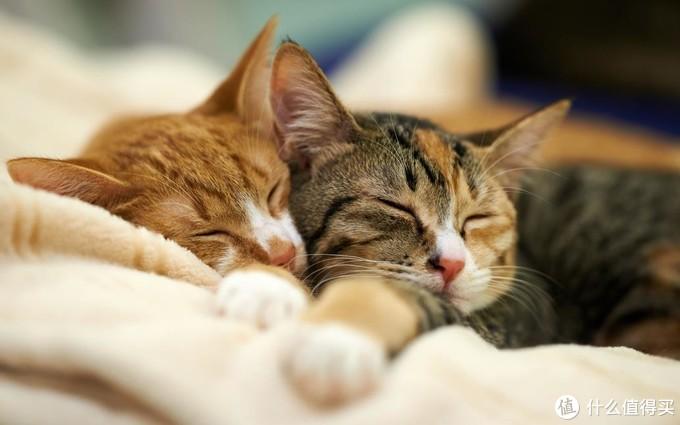 猫咪营养膏什么牌子好?好用的营养膏盘点!