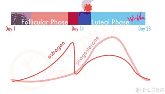 深色实线为雌激素,浅色实线为黄体酮