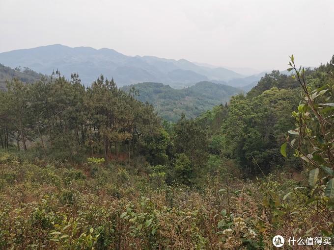 茶园周围皆是山林,生态环境优异