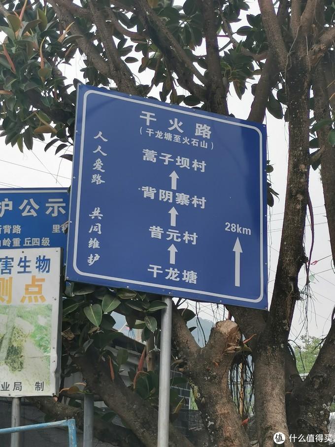 以及各个古茶园所在村寨的指示牌