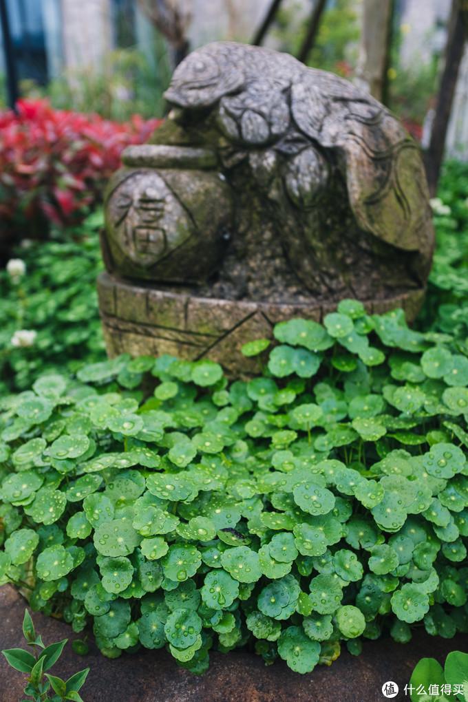 造像和绿植
