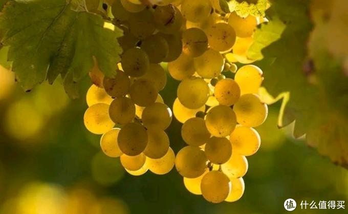 """葡萄酒的""""旧世界""""与""""新世界"""",你知道多少?葡萄酒扫盲贴(建议收藏)"""