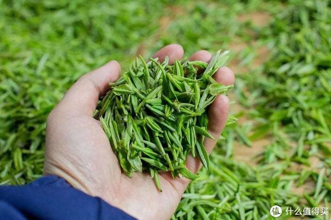 淮南的茶,为什么信阳是第一
