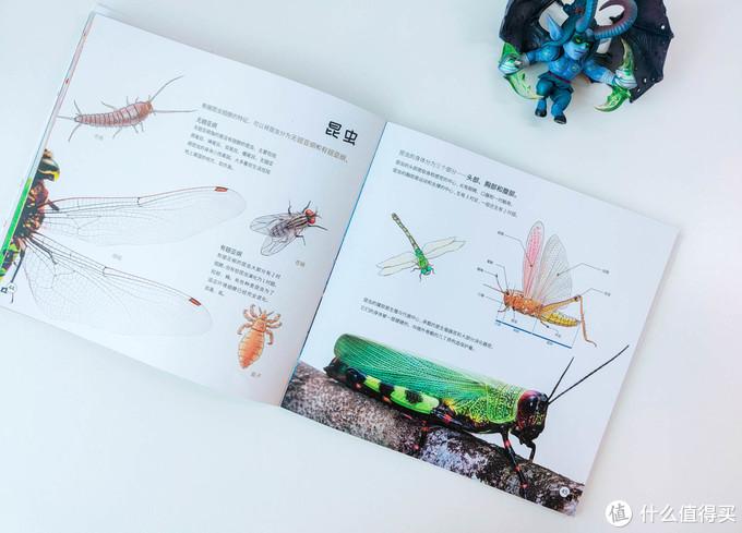 90后都没玩过的儿童玩具,当当狸显微镜体验:大屏成像+拆分设计