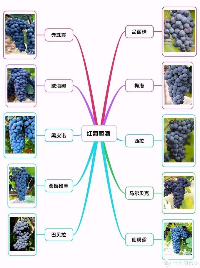 红葡萄酒十强
