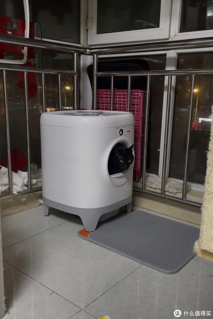 电动猫砂盆评测:不争气的布偶猫和小佩全自动猫厕所