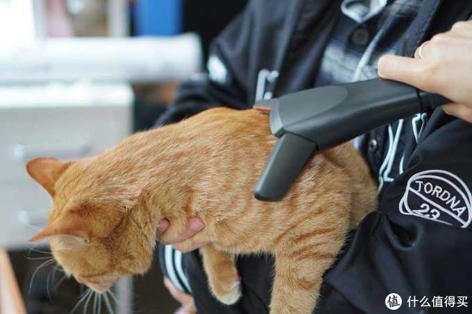 有了它还怕你家猫主子掉毛? 莱克魔洁M10 Pro一机多用。