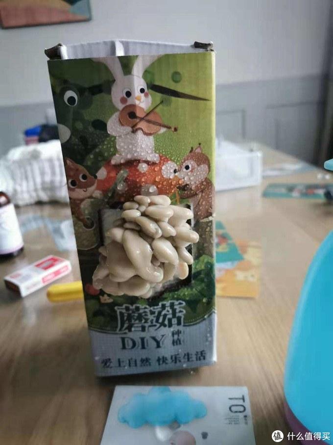 神奇的DIY蘑菇种植盒,让你在家也能种蘑菇吃!